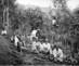 4_enslaved_women_working_on_ramawatie_cinchona_plantation_in_preanger_region_west_java__tm-10012775_1910
