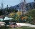 3_garrett_eckbo_alcoa_garden_los_angeles_california_1960_garrett_eckbo_collection_marc_treib_