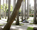 3_baan_palm_tree_bosque_university_city_of_caracas