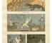 Schreiner_heine__kolonialmachte__simplicissmus_1904